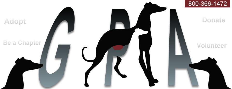 Greyhound vector dog. Pets of america home