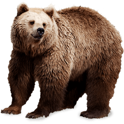 Grizzly bear png. Transparent images pluspng brown