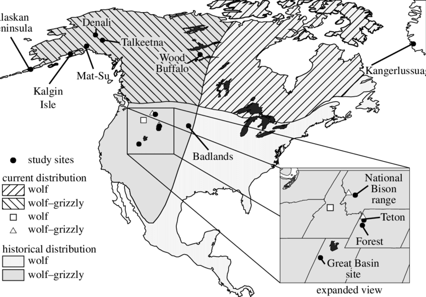 Grizzly drawing forest. Map showing the past