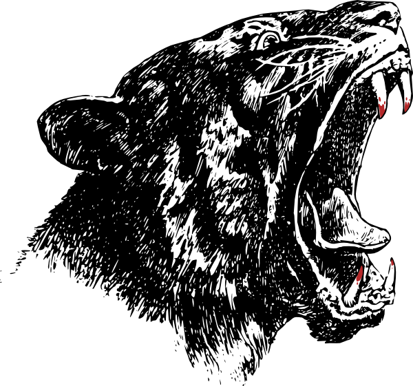 Grizzly drawing roaring. Tiger clip art at