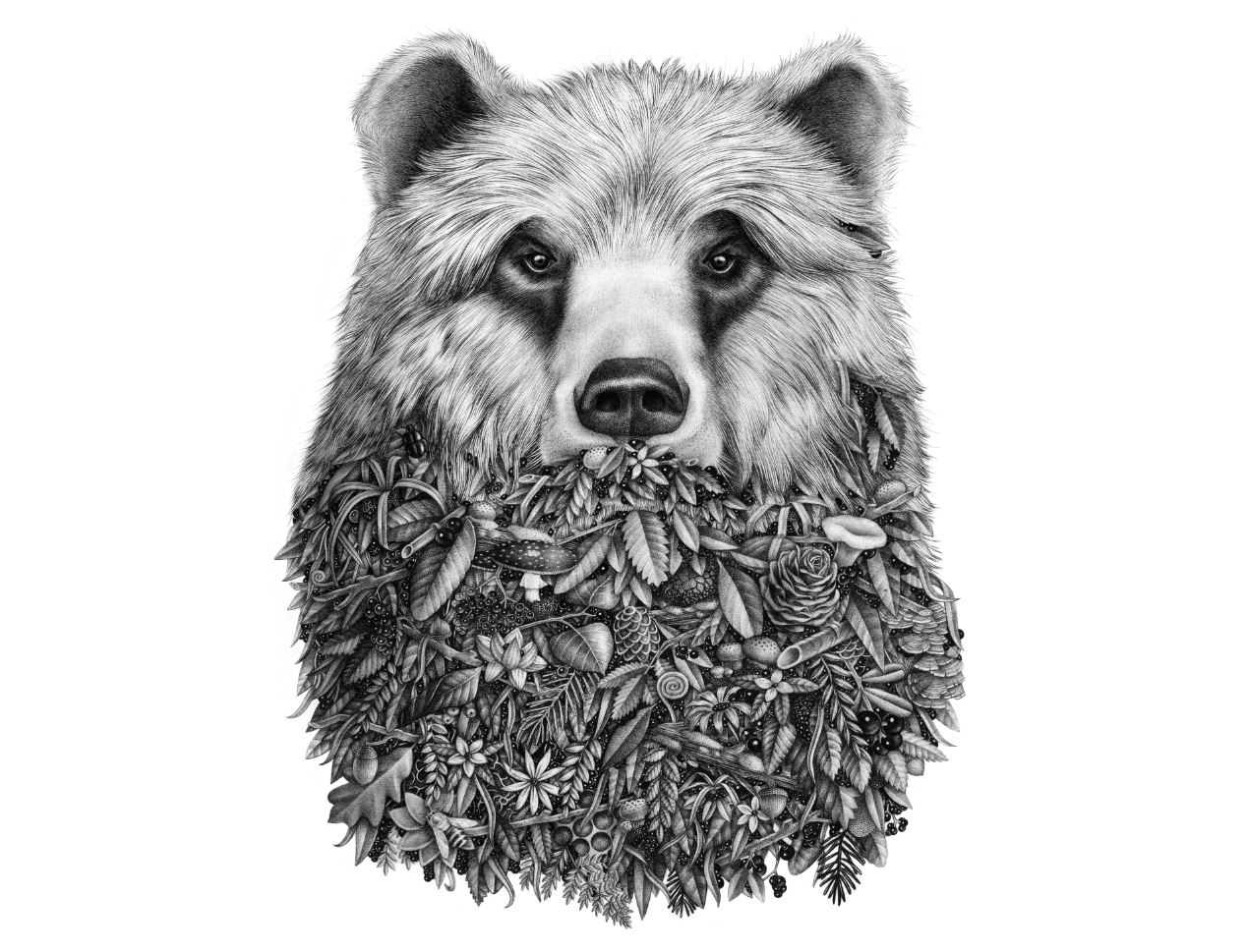 Wildlife drawing pencil. L ours by violaine