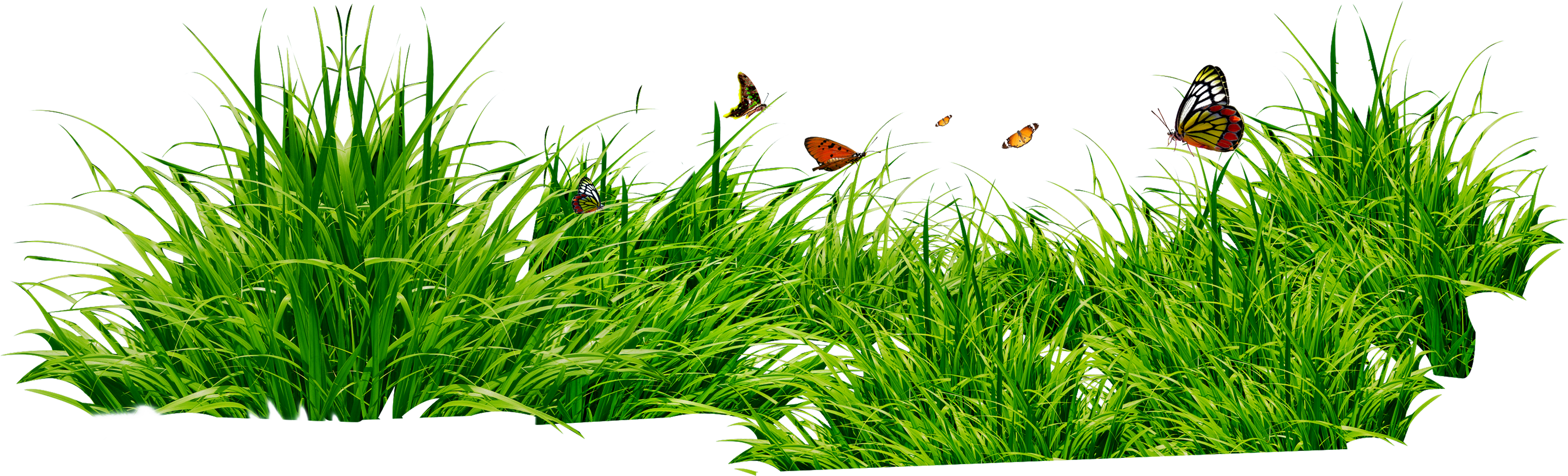 Grass plant png. Images pictures image green