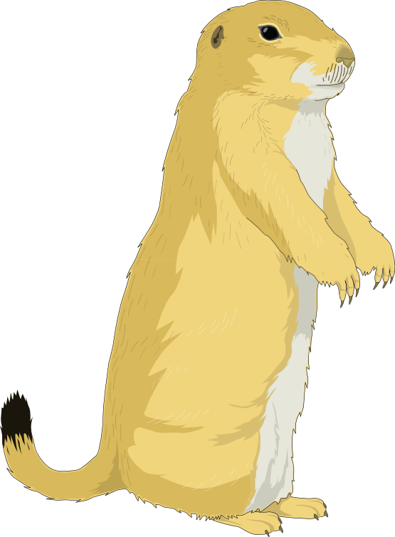 Ground squirrel png. Clipart