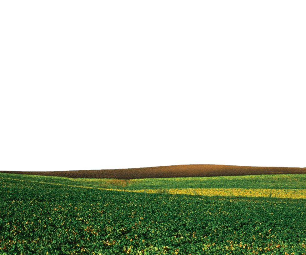 Ground transparent. Nature png by theartist