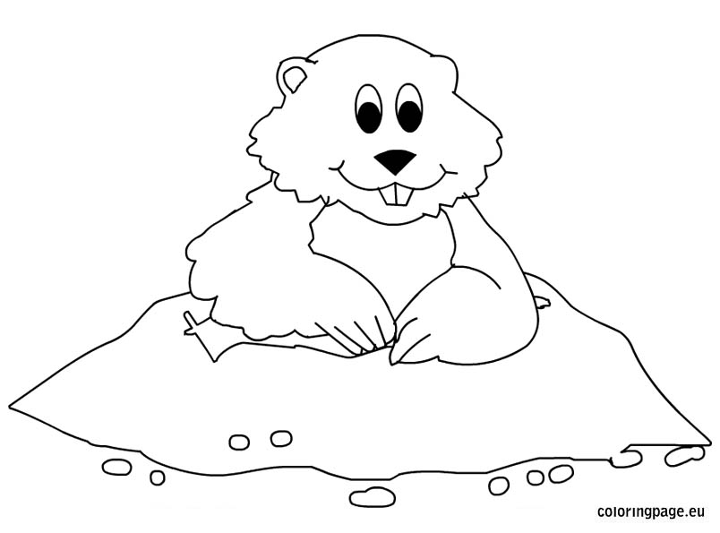 Groundhog clipart coloring page. Color pencil and in