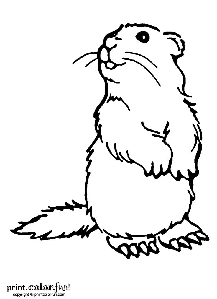 Groundhog clipart outline. Line drawing at getdrawings