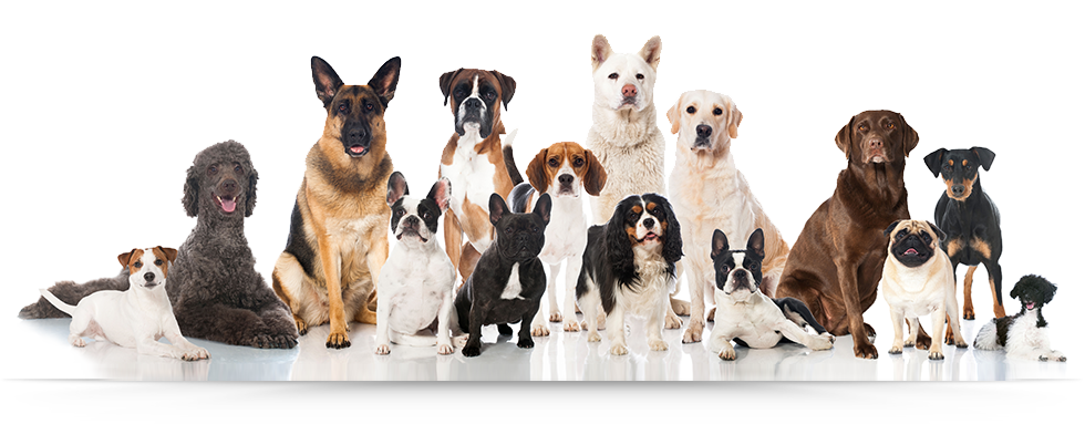 Group of dogs png. Bowzers b pet grooming