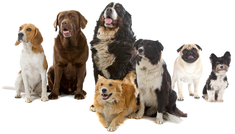 Group of dogs png. South paws doggie daycare