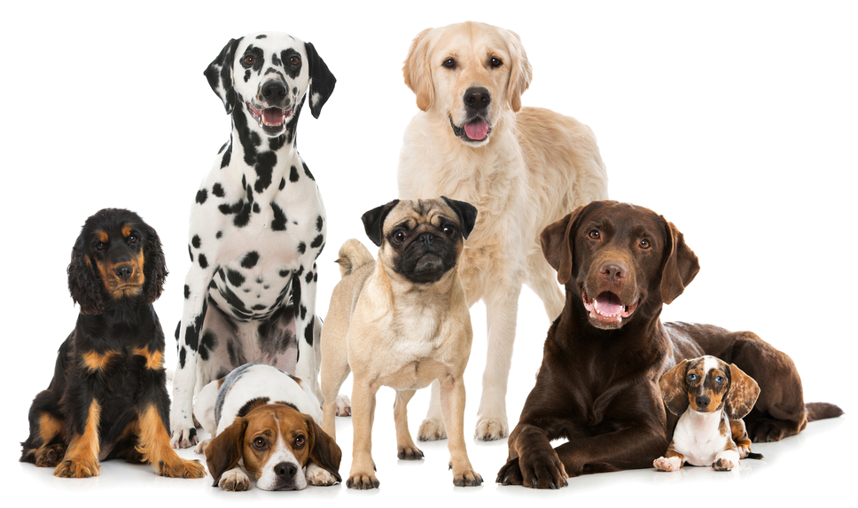 Group of dogs png. Image