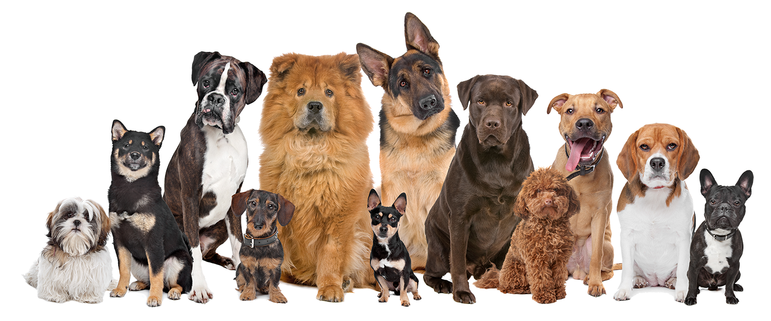 Group of dogs png. Barking dog bakery boutique