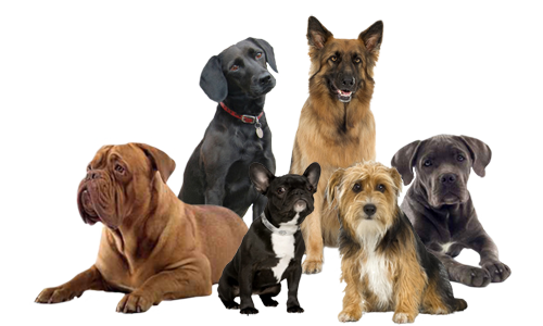 Group of dogs png. Natural dog training