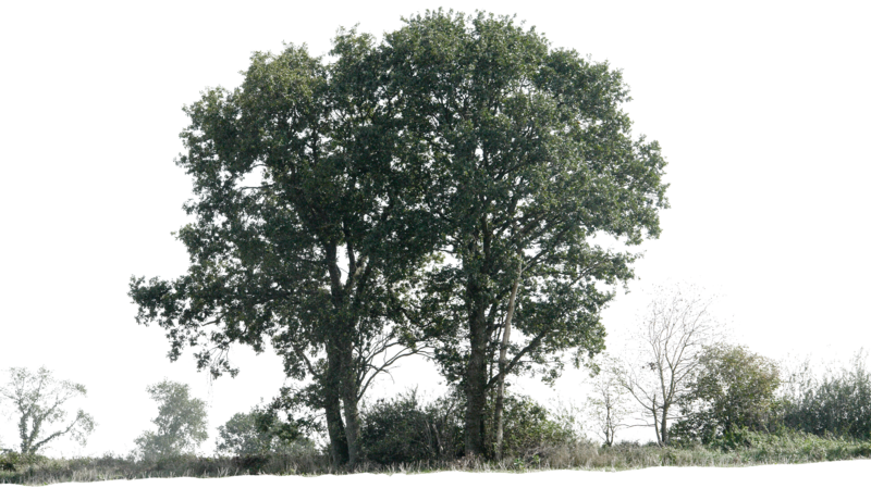 Group of trees png. Tree by gd on