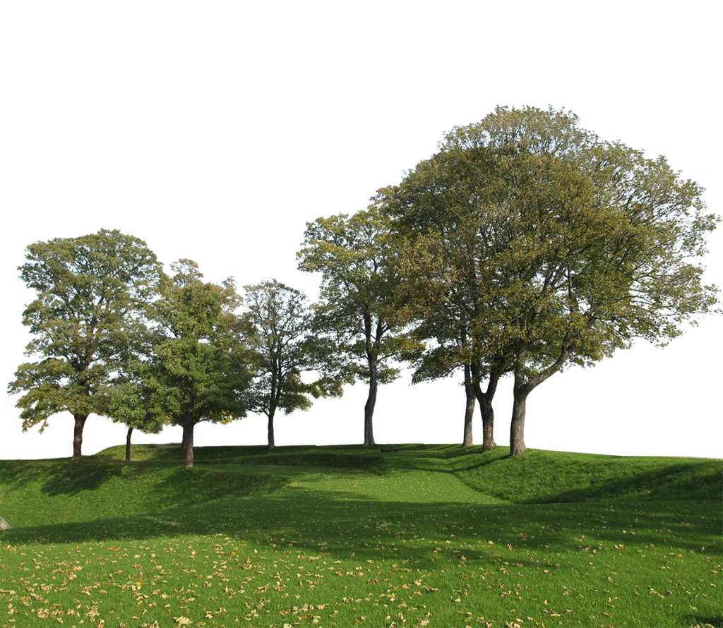 Group of trees png. Big cutout