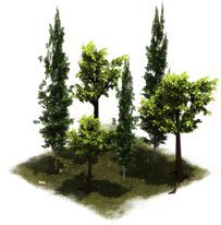 Group of trees png. File latemiddleage forge empires