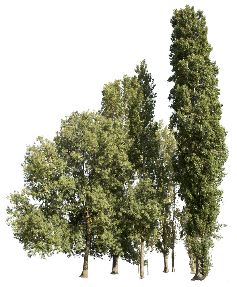 Group of trees png. Cutout