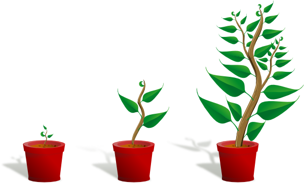 Growing plant png. Growth clip art at