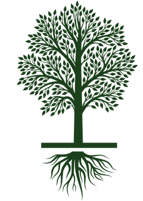 Growth vector tree life cycle. Growing icon set clipart