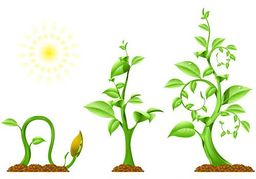 Growth clipart plant. Panda free images info