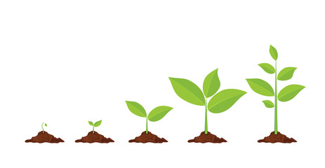 Growth clipart plant. Growing at getdrawings com