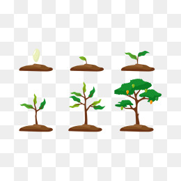 Growth clipart plant. Png vectors psd and
