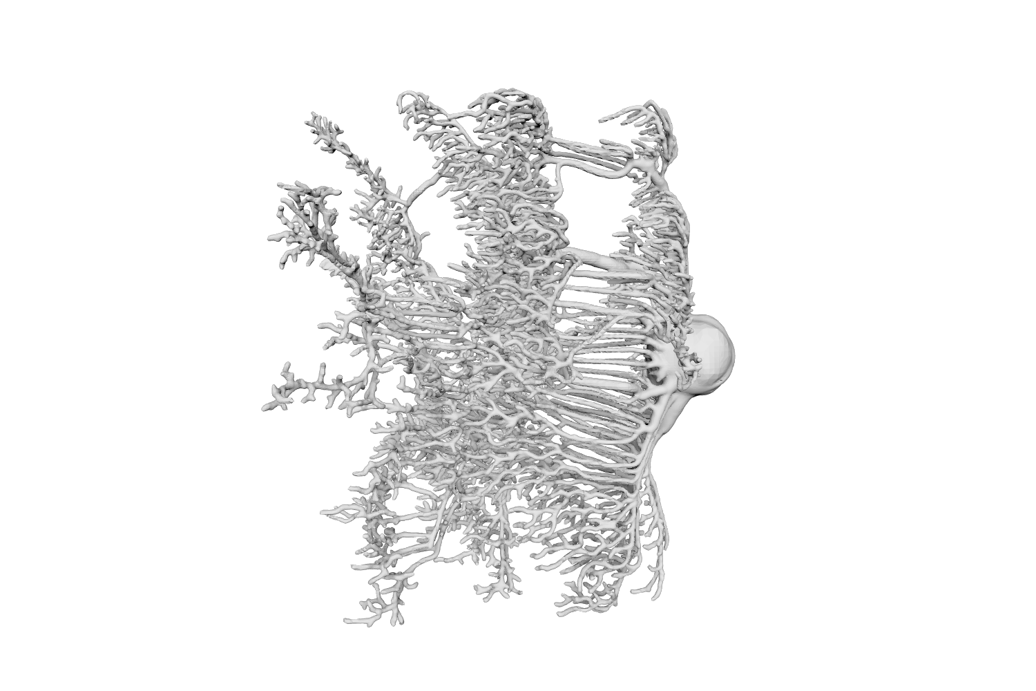 Growth drawing body. Kinetrope translab the motions