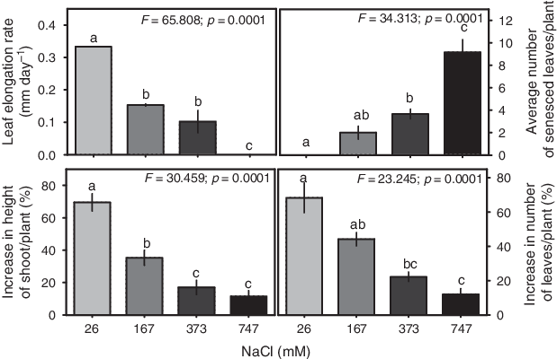 Growth drawing city. Parameters of aeluropus lagopoides