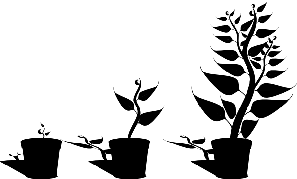Growth drawing clipart. Plant clip art at
