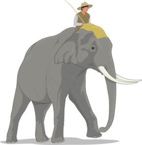 Growth drawing elephant. Educo latin to bring