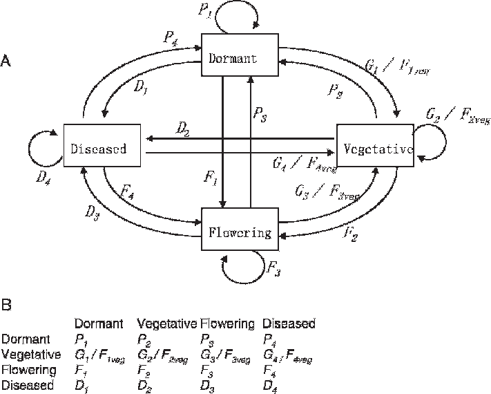 Graph of a v. Growth drawing life cycle jpg transparent library