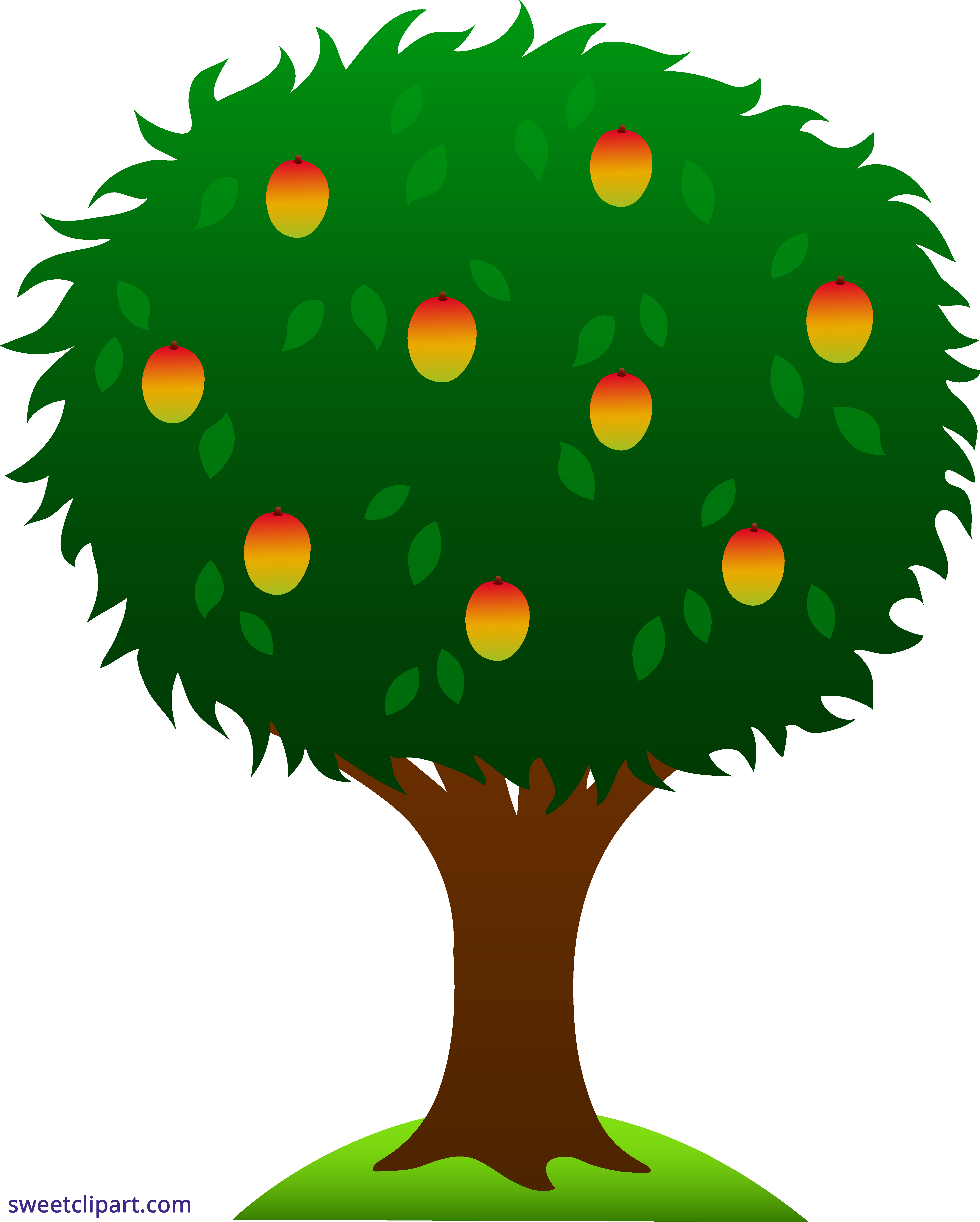 Growth drawing mango tree. Png free library download