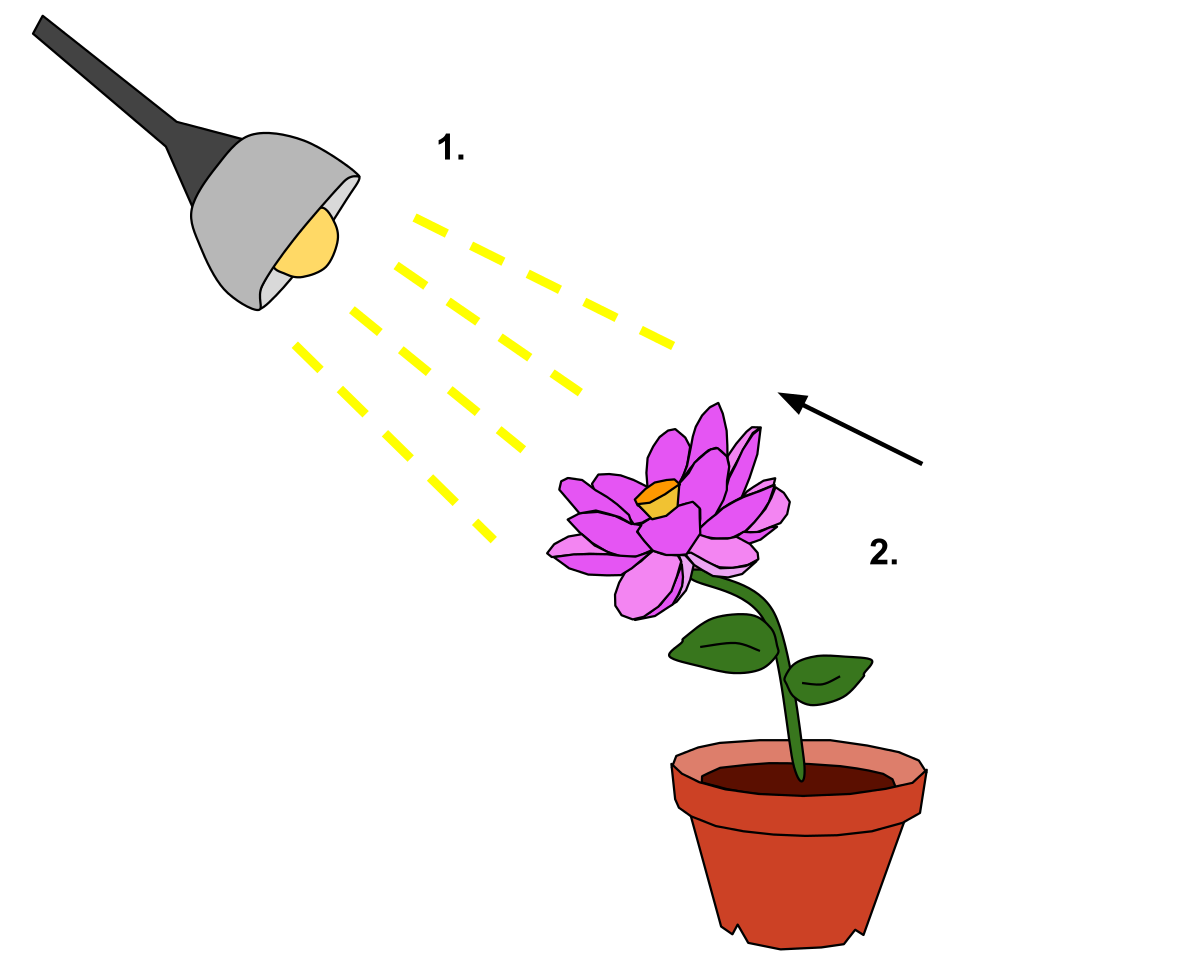 Growth drawing plant. Phototropism wikipedia