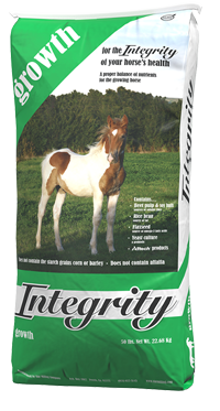 Growth vector green plant. Feed for young horses