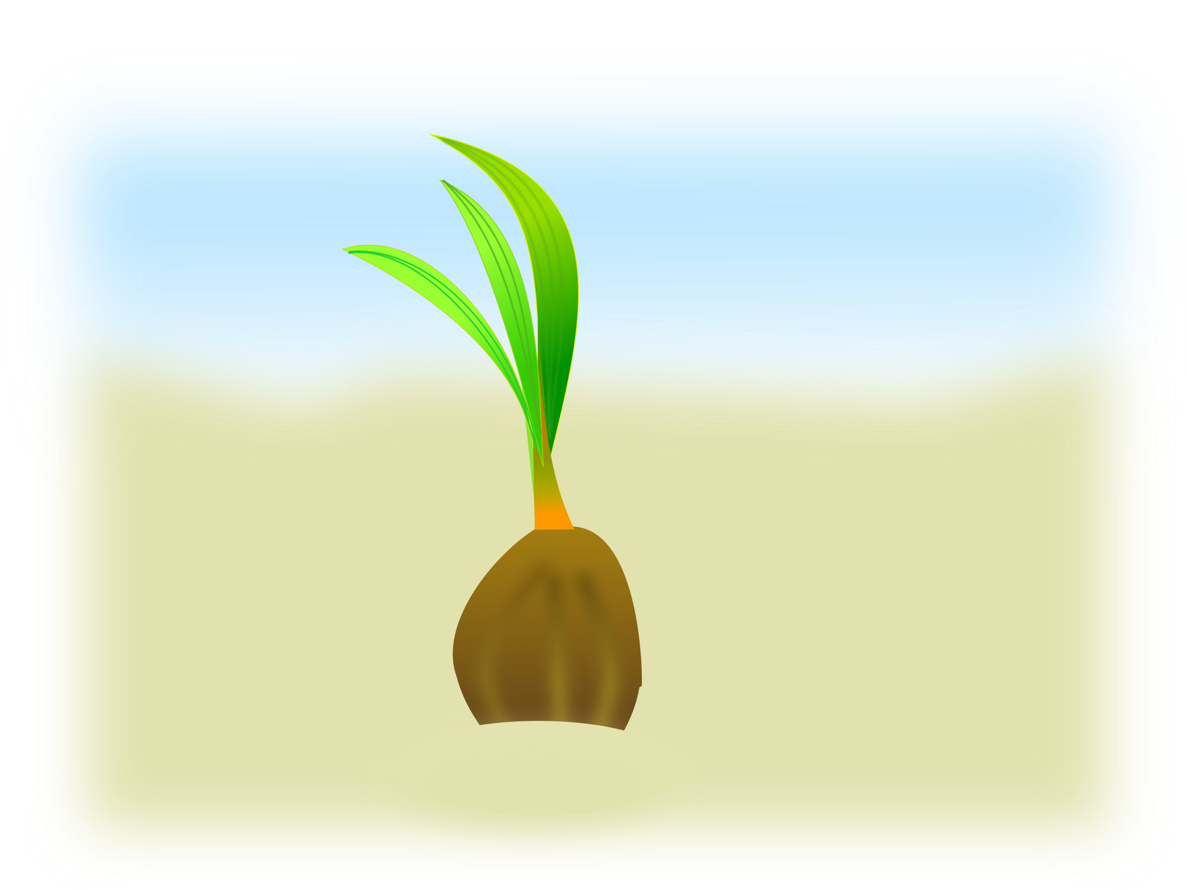 Coconuts vector animated. Clipart coconut seed big