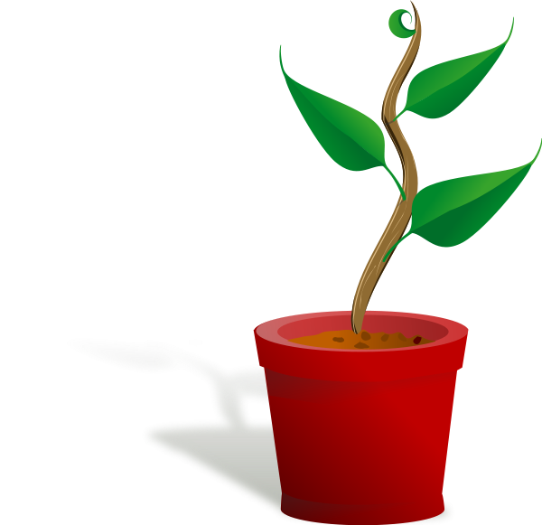 Growth vector seed germination. Seedling clipart tall plant