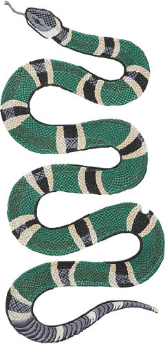 Gucci snake png. Images in collection page