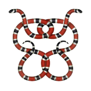 Gucci vector snake. Png image related wallpapers