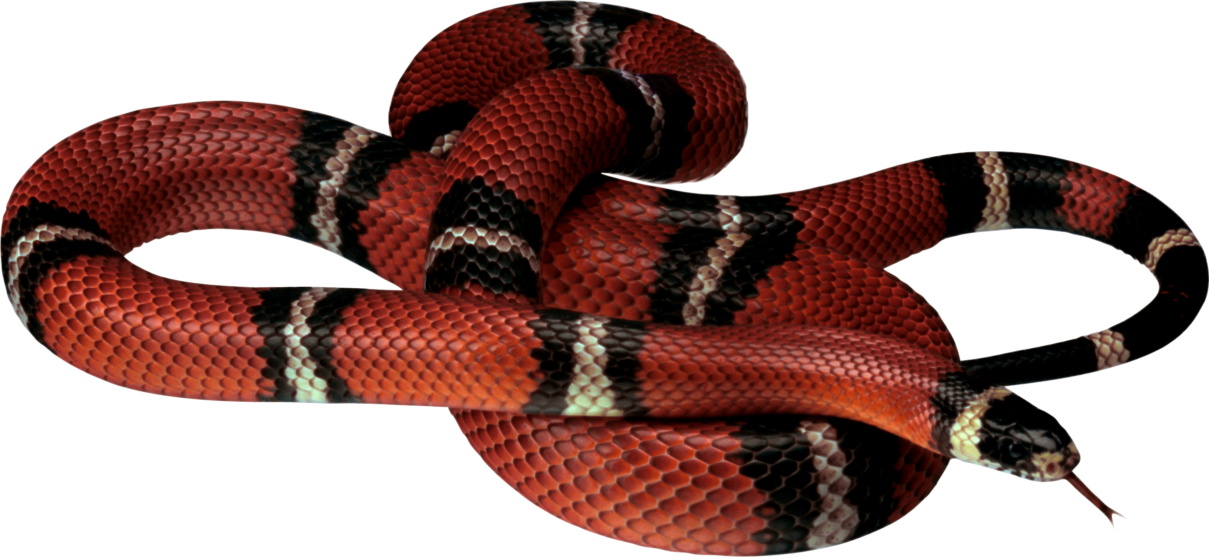 Gucci snake png, Picture #673020 gucci