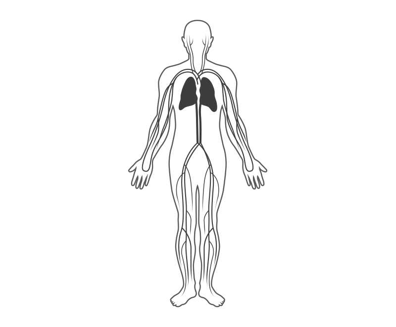 18 Skinny Drawing Human Anatomy For Free Download On Ya Webdesign