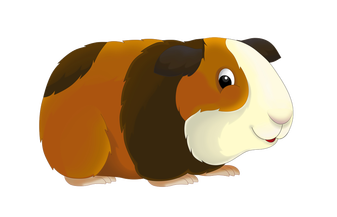 Guinea pig png. Pigs meet our