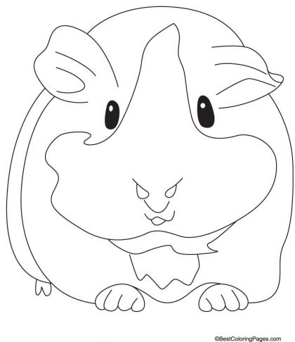 Guinea Coloring Pages Transparent Png Clipart Free Download Ywd