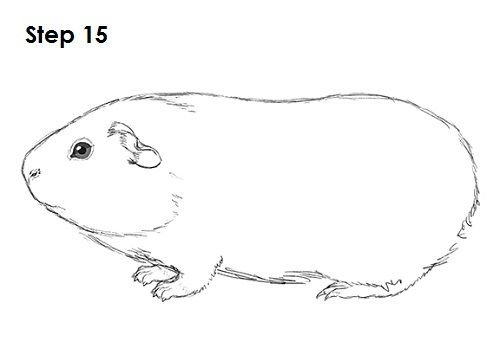 Hamster clipart guinea pig. Animal silhouettes vectors svg