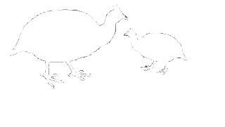 Guinea clipart guinea fowl. Cottage self catering somerset