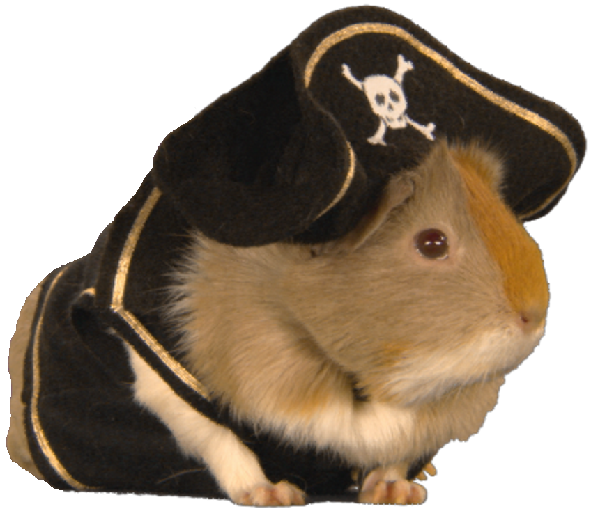 Guinea pig png. Image pigs stripe south