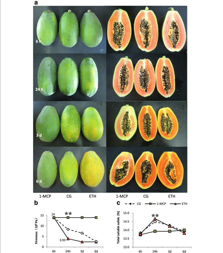 H transparent fruit. Firmness and total soluble