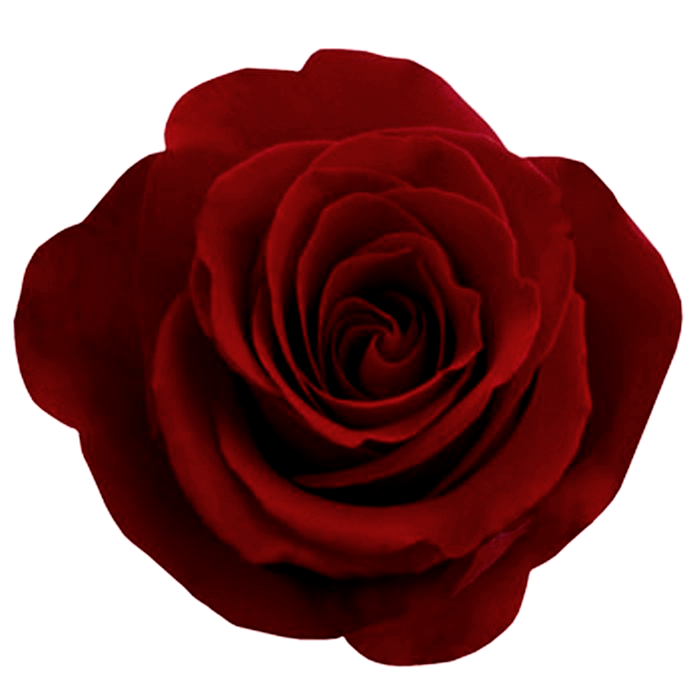Hair flower png. Valentinesday rose by bnspyrd