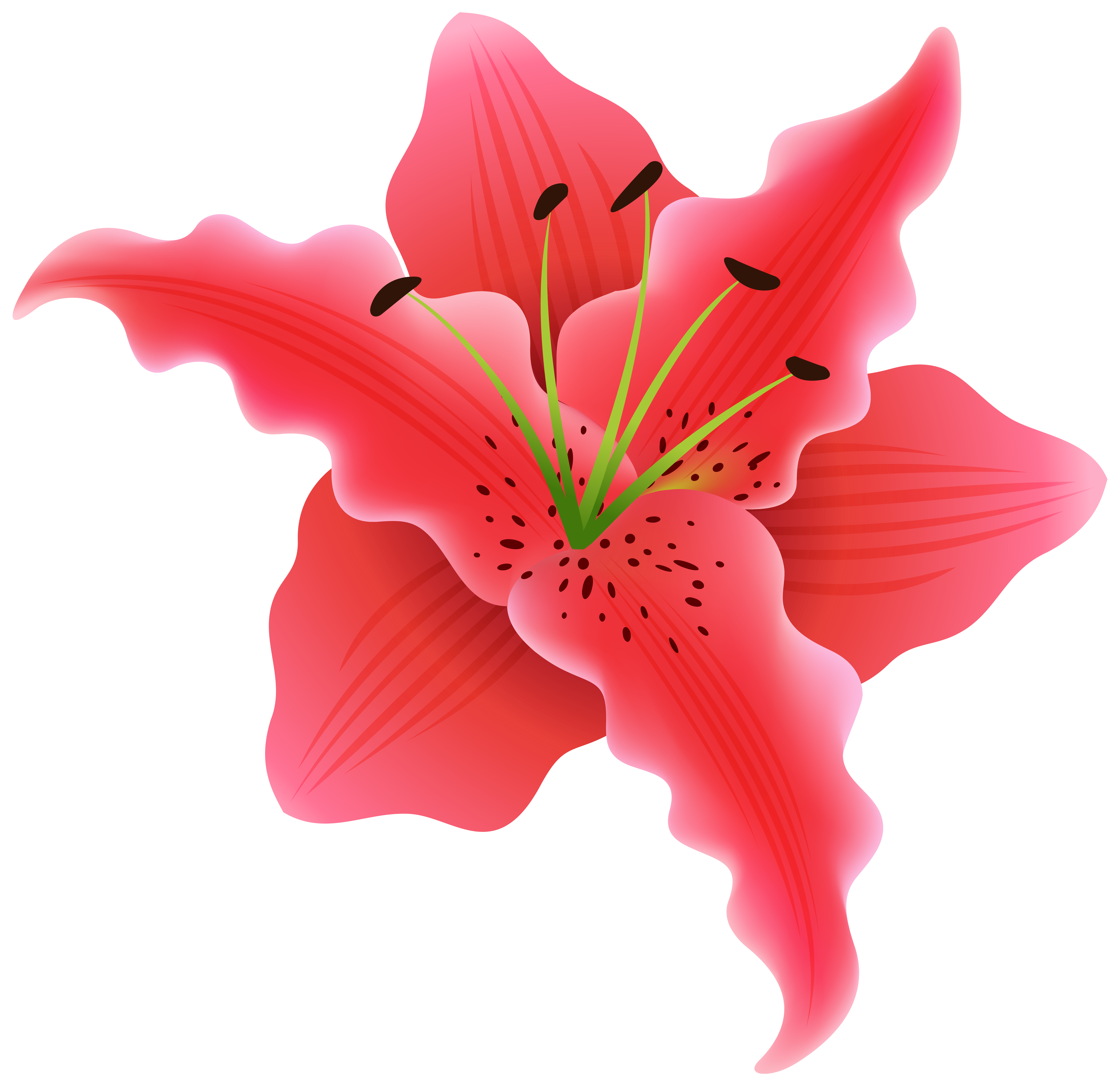 Hair flower png. Beautiful exotic clipart image