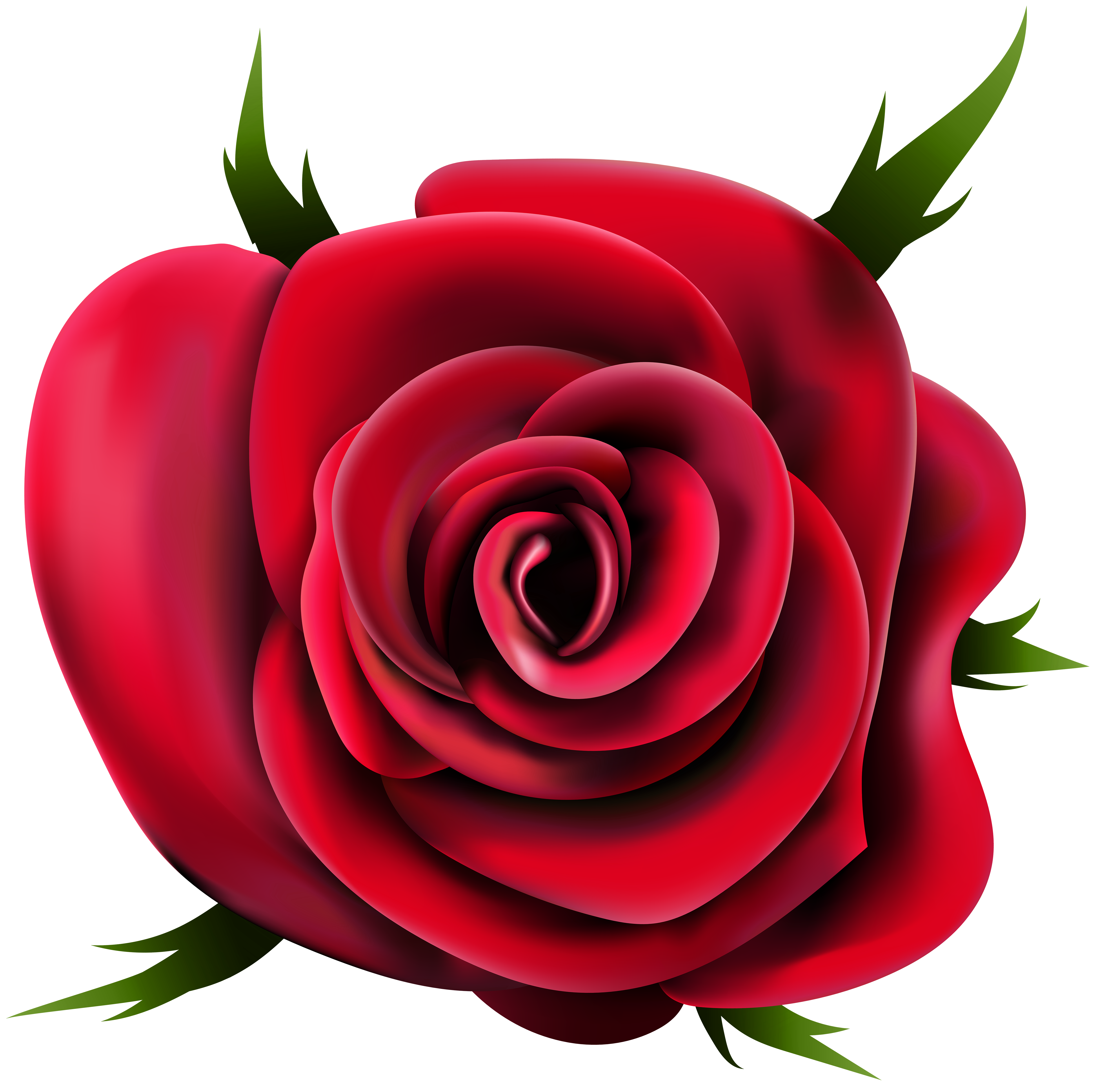 Hair flower png. Transparent rose clip art