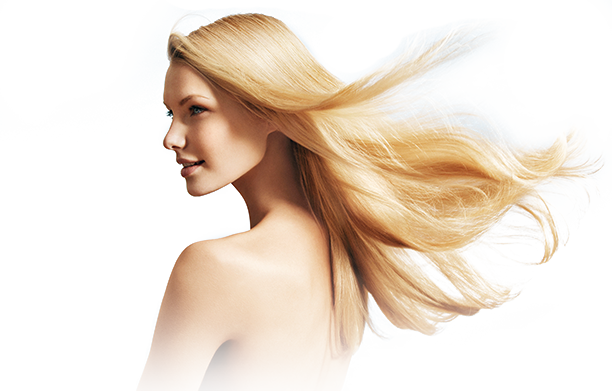 Model vector hair. Free png image clipart