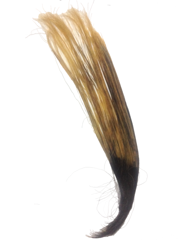 Hair strand png. File human partly bleached