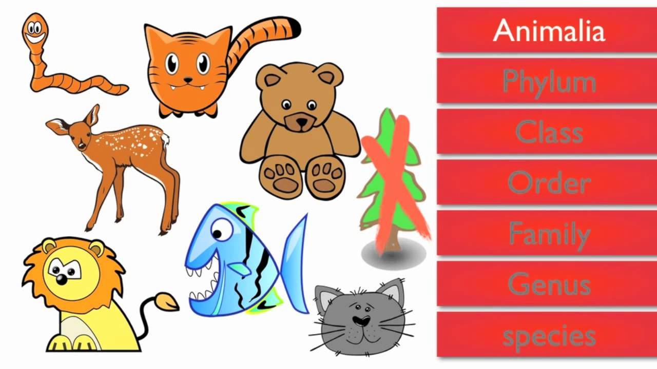 Hammer clipart living thing. Classifying group classification of